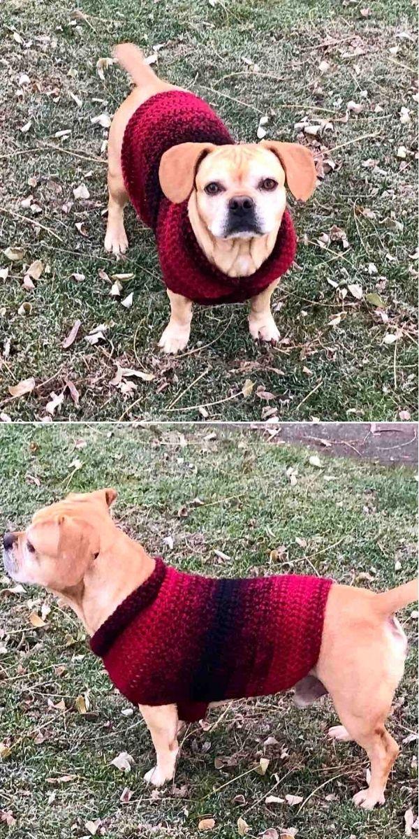 Easy Dog Sweater Medium