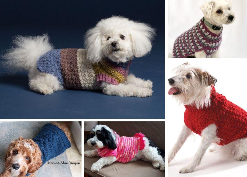 20 Best Crochet Dog Sweaters